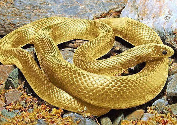 Wishing Snake